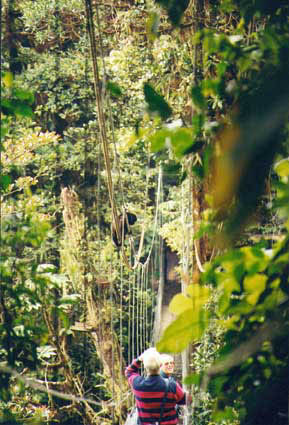 Cloudforest canopy bridge